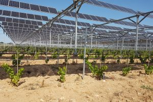 Generale-du-solaire-Agrivoltaisme